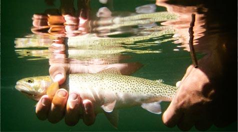 Selway River Fishing